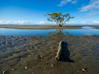 Australia, Brisbane, Tree on Nudgee beach