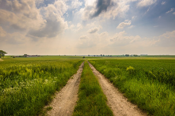 Summer landscape with road, green meadow and cloudy sky .