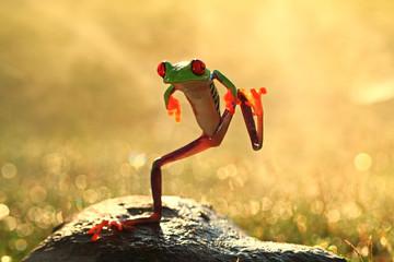 Indonesia, Riau Islands, Batam City, Dancing frog