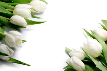 white tulips in two corners, isolated on white background