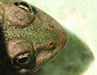 Close-up of frog's head