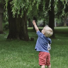 little boy trying to reach branch