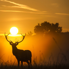Silhouette of reindeer at sunset