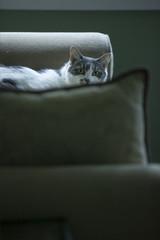 Cat lying on cushions