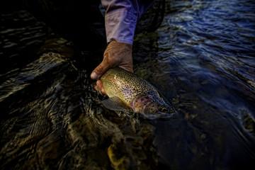 USA, Colorado, Hinsdale County, Lake City, Angler holding fish, close-up