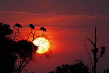 Kenya, Narok, Masai Mara National Park, African sunset landscape