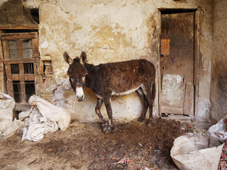 Mexico, Portrait of donkey