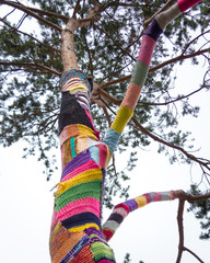 Denmark, Odense, Yarn bombing on tree