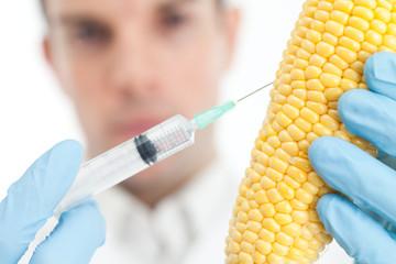 Scientist injecting corn cob