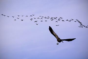 One Bird Flying Towards Flock Of Birds