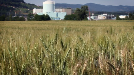 Shot of grain field with factory in the back