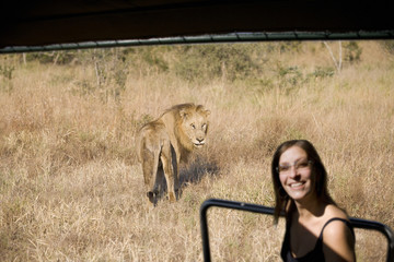 South Africa, Limpopo, Kruger National Park, Woman on safari, lion in background