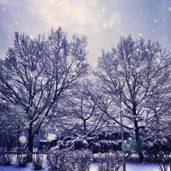 Czech Republic, Prague, Park in winter