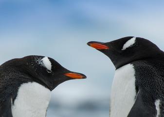 Portrait of two penguins
