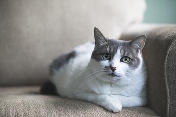Portrait of cat lying on sofa