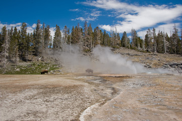 USA, Wyoming, Yellowstone National Park, Steam over hot springs