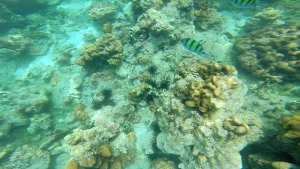 Rainforests of the sea coral reefs, Southern Hemisphere
