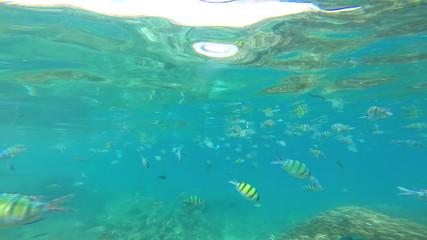 Marine life below ocean waves, Southern Hemisphere