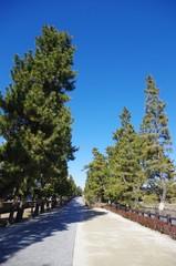 日光街道の草加松原