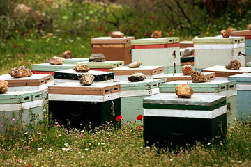 Beehives in grass