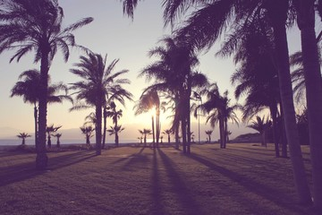 Silhouette of palm tress on beach