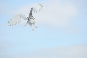 Owl Flying In The Sky