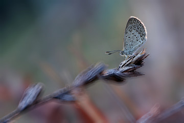 Indonesia, Central Java, Bandungan, Side view of butterfly on plant