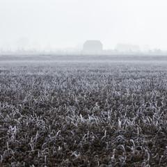 Spain, Catalonia, Lleida, Frozen field in fog