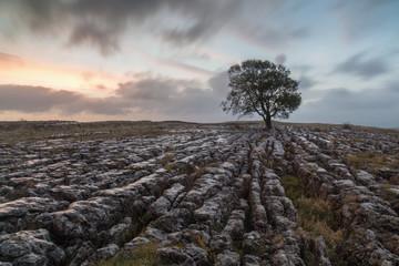 UK, England, Yorkshire, Malham Ash at Sunrise