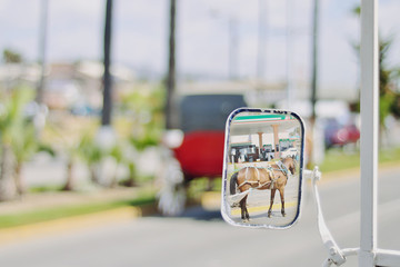 Reflection of horse and cart in wing mirror