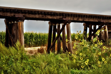 Rural train trestle surrounded by corn and wild flowers