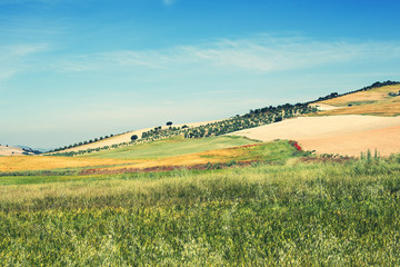 Spain, Campo, Green and yellow fields on hillside
