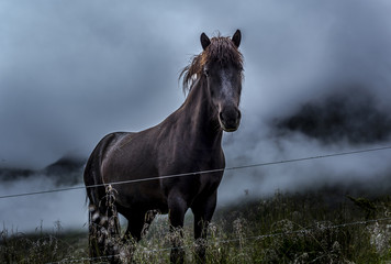 Portrait of black horse in field
