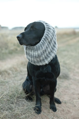 Black dog wearing gray knit scarf sitting on dirt road