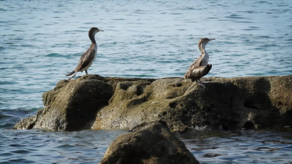 Birds on the rock.