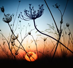 Spain, Silhouette of grass at sunset