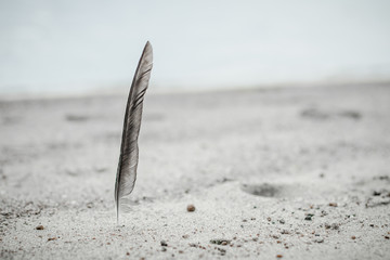 Norway, Feather found on beach