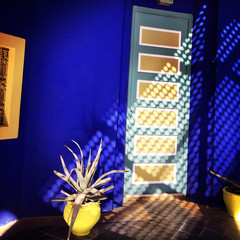 Morocco, Marrakesh, Part of Jardin Majorelle