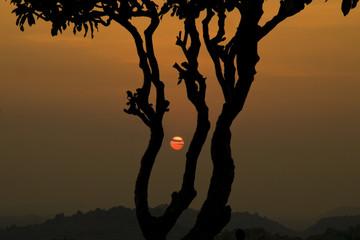 India, Karnataka, Hampi, Silhouette of tree at sunset