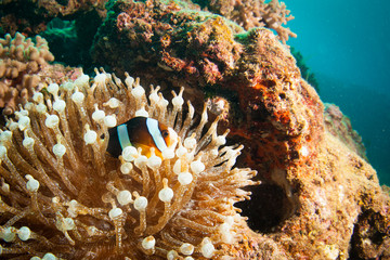View of Sea anemone