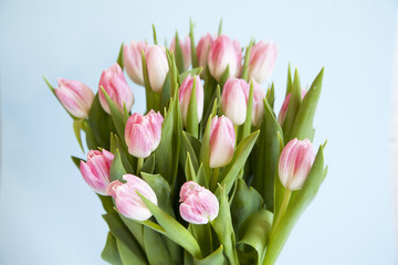 Close up of pink and white Tulips