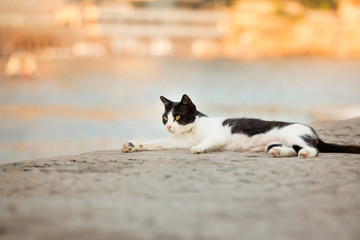 Black and white cat resting by lake