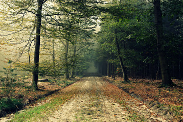Netherlands, Odoorn, Dirt road in forest