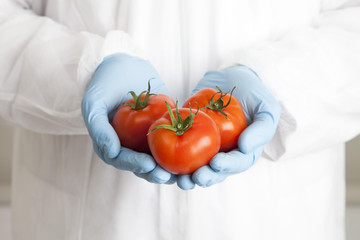 Close up of scientist holding tomatoes