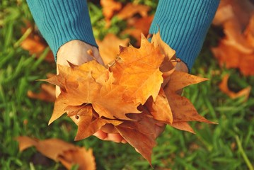 Human hands with autumn leaves