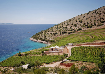 Croatia, Vineyards on hillside by sea