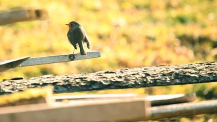 Still shot of a bird on a tree branch