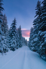 Way through snowy forest at dawn