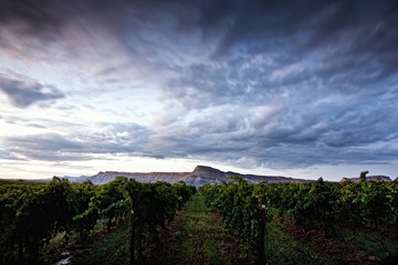 USA, Colorado, Mesa County, Sunset over Palisade Vineyard