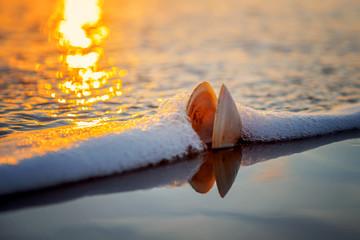 Shell on beach